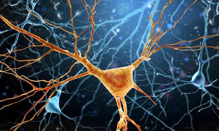 Entstehung von Neuronen im Hirn. Foto: K.E.N./istock