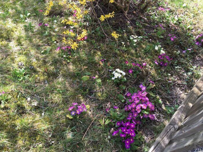 Ein bienenfreundlicher Garten. Foto: Ulrike Ziegler