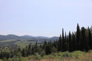 Waldeinsamkeit über Florenz. Foto: Stephan Bleel