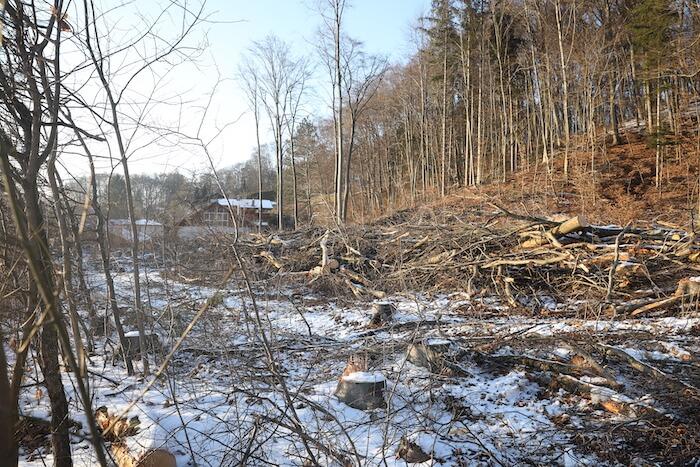 Abgeholzter Wald am Ortsende von Steinbach. Foto: Stephan Bleek