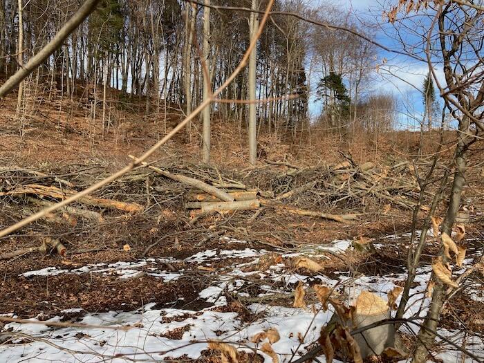 Unprofessionelle Abholzung. Foto: Ulrike Ziegler