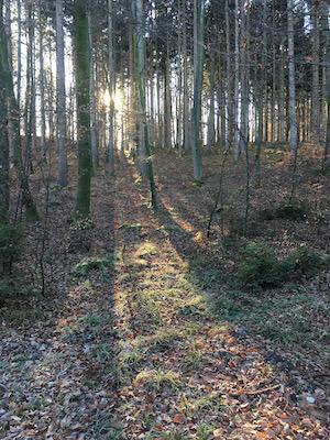 Wald im Abendlicht. Foto: Ulrike Ziegler